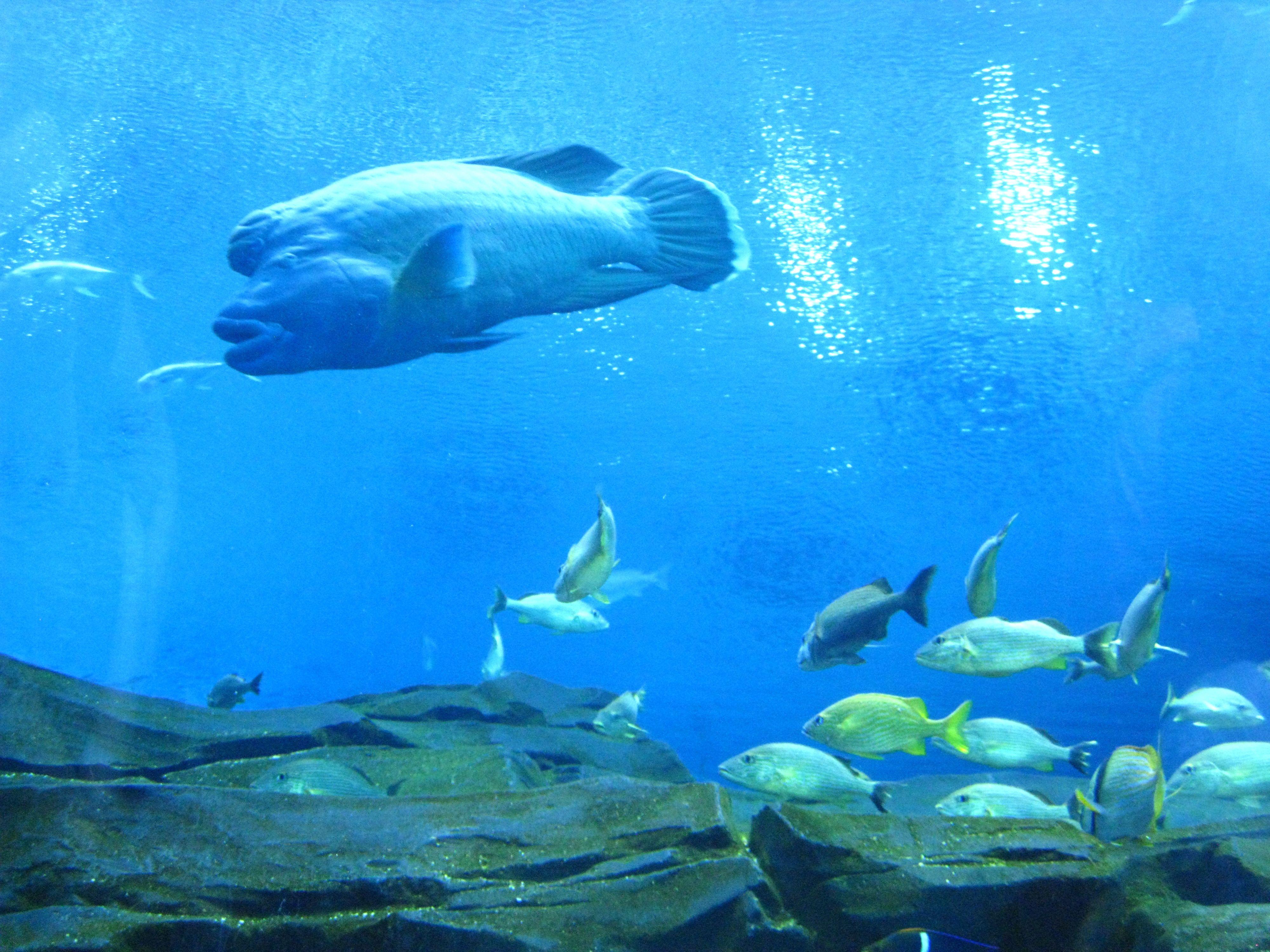 Fish in big aquarium - Pictures