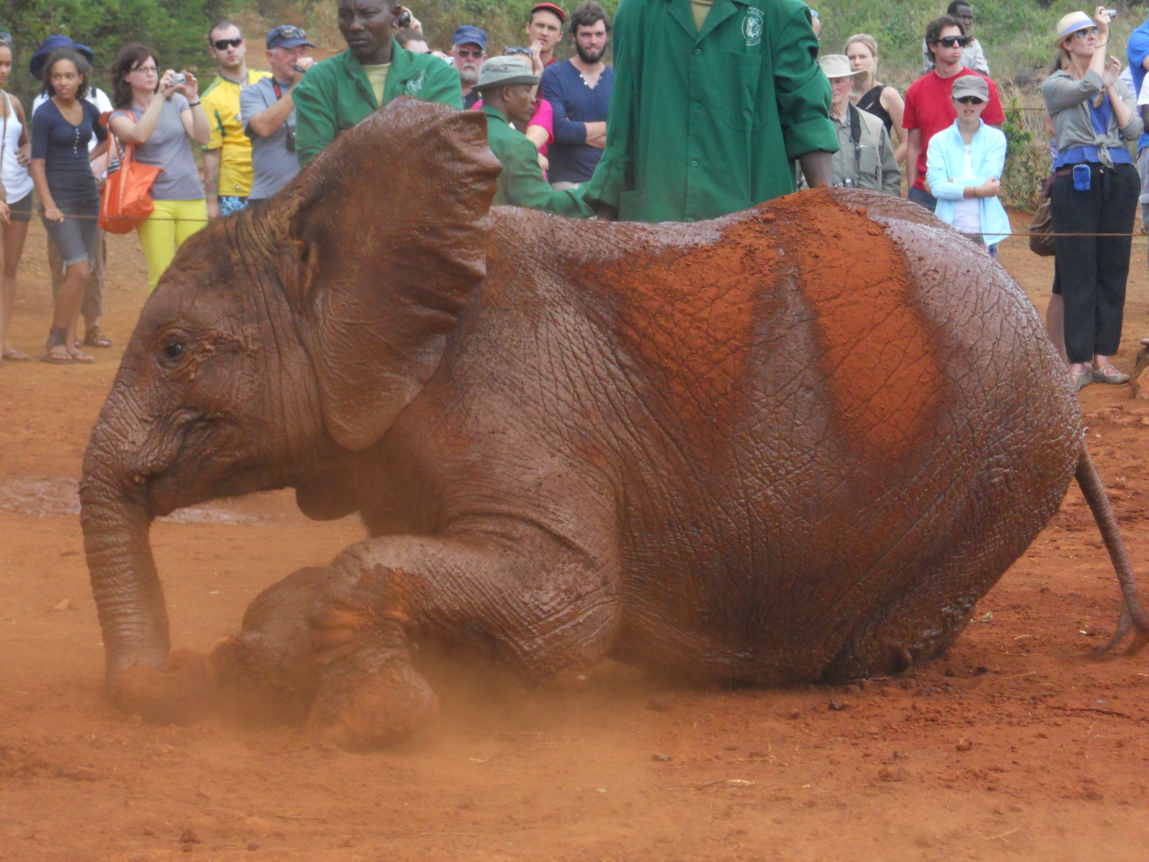 photo essay nairobi elephant orphanage where is yvette  share this