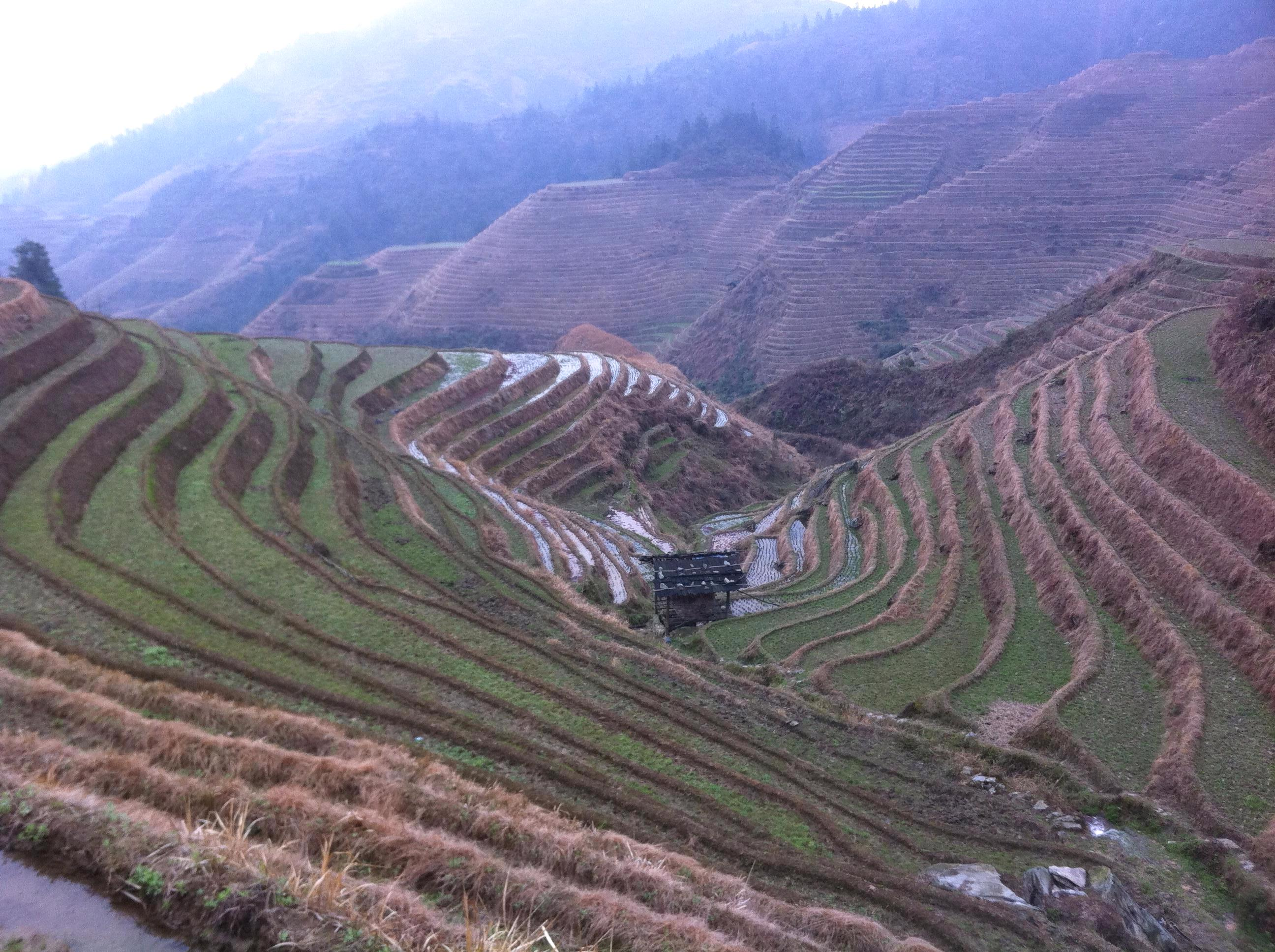 The longji rice terraces where is yvette for Terrace farming definition